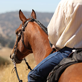 A profile view of a cowboy and his horse.