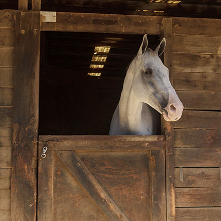 Louisville, Kentucky, United States,  July 2015: Brown bay horse